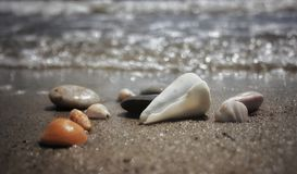 贝壳和石头 免版税库存照片
