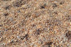 贝壳在克里米亚 库存图片