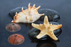 贝壳在黑色水中 库存图片