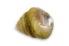 贝壳小vi 库存图片