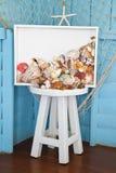 贝壳收集 库存照片