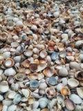 贝壳混合背景 库存图片