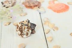 贝壳的被弄脏的图象在木背景的 背景更多我的投资组合旅行 免版税图库摄影