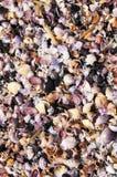 贝壳背景热带越南的海滩 库存照片