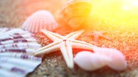 贝壳,蜗牛,太阳 构成,静物画 暑假和心情的概念 免版税图库摄影