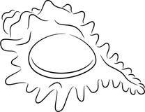 贝壳 免版税库存照片