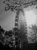 贝尔法斯特的一个单色图象在12月把散开的软性引入平衡一天的光 库存图片