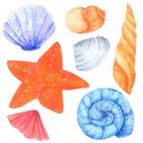 贝类和海星在白色背景的水彩汇集,手拉为孩子,贺卡,案件设计, 库存例证