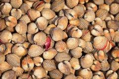 贝类血液鸟蛤-可食的背景 免版税库存照片