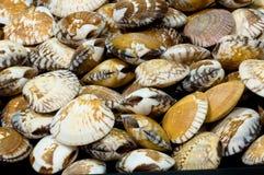 贝类,软体动物 库存图片