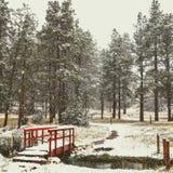 贝雷帽蓝色焰晕外套父亲高尔夫球外套妈咪红色降雪的儿子结构冬天 库存图片
