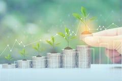 财务,妇女手在自然绿色背景、投资和事务的植物生长在堆的藏品硬币金钱和图表 库存照片