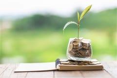 财政植物生长在节约金钱的硬币玻璃瓶子的和事务的投资,概念,创新、成长和金钱 免版税库存图片