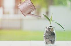 财政节约金钱和的投资,储款和做金钱概念 种植生长在瓶子的储款硬币在木桌上 免版税库存照片