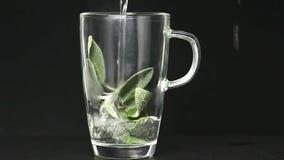 贤哲、植物和茶准备 股票视频
