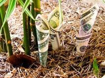 货币的增长。 库存图片