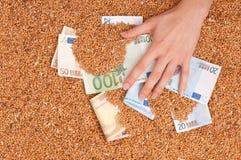 货币的庄稼 图库摄影