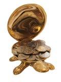 货币草龟 库存照片