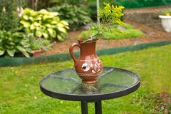 质朴的花一枝黄花在别墅桌上的一个水罐站立 图库摄影