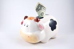 贪心银行的母牛 库存图片