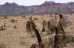 贫瘠峡谷红色岩石 免版税库存图片