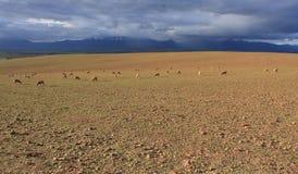 贫瘠牧场地 免版税库存照片