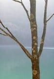 贫瘠结构树 库存照片
