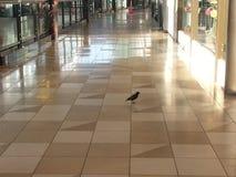 购物中心鸟 图库摄影