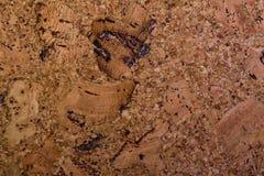 贴墙纸软木树 库存图片