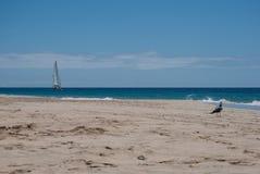 费埃特文图拉岛,白色沙子海滩- 001 免版税图库摄影