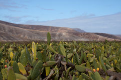 费埃特文图拉岛 免版税库存图片