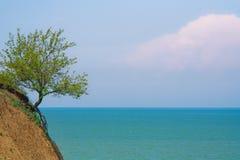 费用偏僻的结构树 库存照片