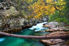 贾斯珀国家公园恶性峡谷 库存图片