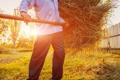 资深农夫人会集与干草叉的干草在日落在乡下 坚苦工作 特写镜头 库存图片