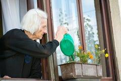 资深在房子窗口的妇女浇灌的花 免版税图库摄影