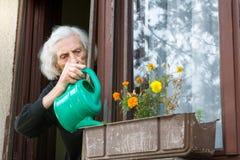 资深在房子窗口的妇女浇灌的花 图库摄影