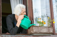 资深在房子窗口的妇女浇灌的花 库存图片