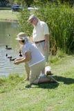 资深在池塘的夫妇哺养的鸭子 免版税库存照片