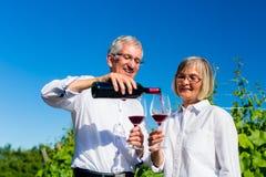 资深妇女和人饮用的酒在葡萄园里 库存照片