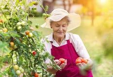 资深妇女在她的庭院里 图库摄影