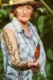 资深妇女在她的手上的拿着一棵被收获的红萝卜 库存照片