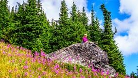 资深妇女坐一个大岩石在野花盖的高山草甸 免版税库存照片