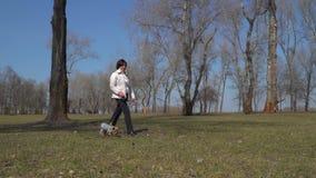 资深妇女步行在有小犬座的公园 股票录像