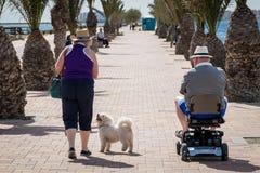 资深漫步在海边散步的夫妇和狗 免版税库存图片