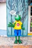 资深青蛙小雕象在科苏梅尔,墨西哥 库存图片