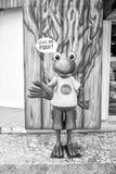 资深青蛙小雕象在科苏梅尔,墨西哥 免版税库存图片