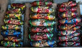 赛拉serrata 新鲜的螃蟹在栓与五颜六色的塑料绳索并且被安排整洁的行在海鲜市场上在泰国 库存图片