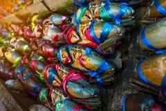 赛拉serrata 新鲜的螃蟹在栓与五颜六色的塑料绳索并且被安排整洁的行在海鲜市场上在泰国 免版税图库摄影