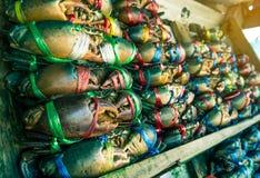 赛拉serrata 新鲜的螃蟹在栓与五颜六色的塑料绳索并且被安排整洁的行在海鲜市场上在泰国 免版税库存照片
