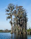 赛普里斯沼泽,寄生藤, Okefenokee沼泽全国野生生物保护区 免版税库存照片